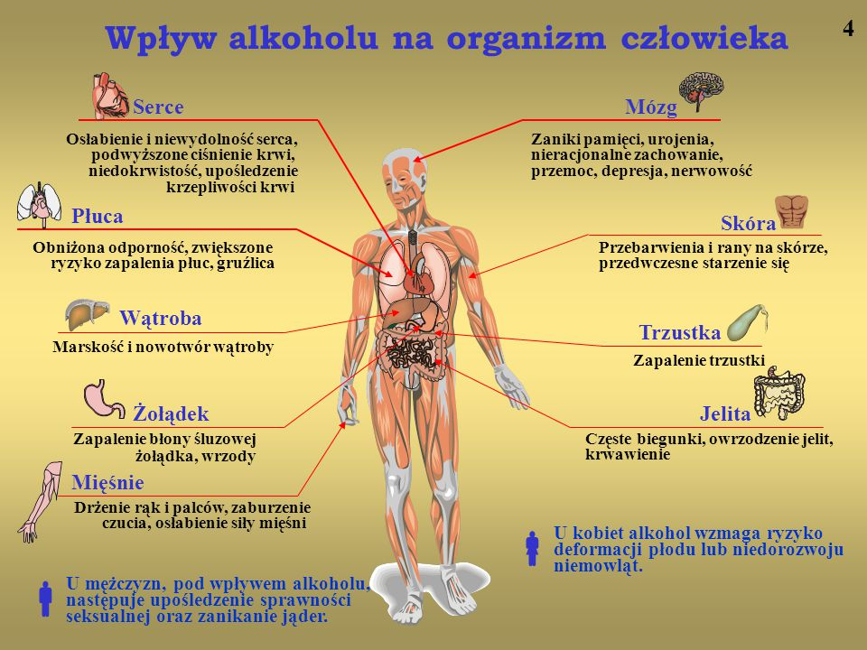   Wpływ alkoholu na organizm człowieka 4 Serce Mózg Płuca Skóra