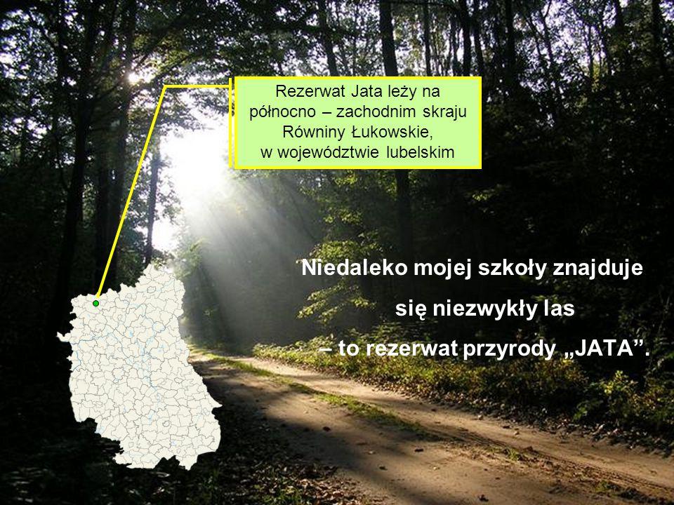 Rezerwat Jata leży na północno – zachodnim skraju Równiny Łukowskie, w województwie lubelskim