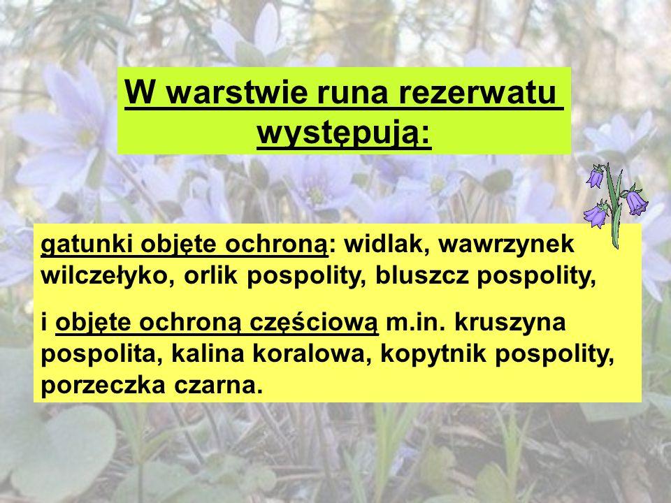 W warstwie runa rezerwatu występują: