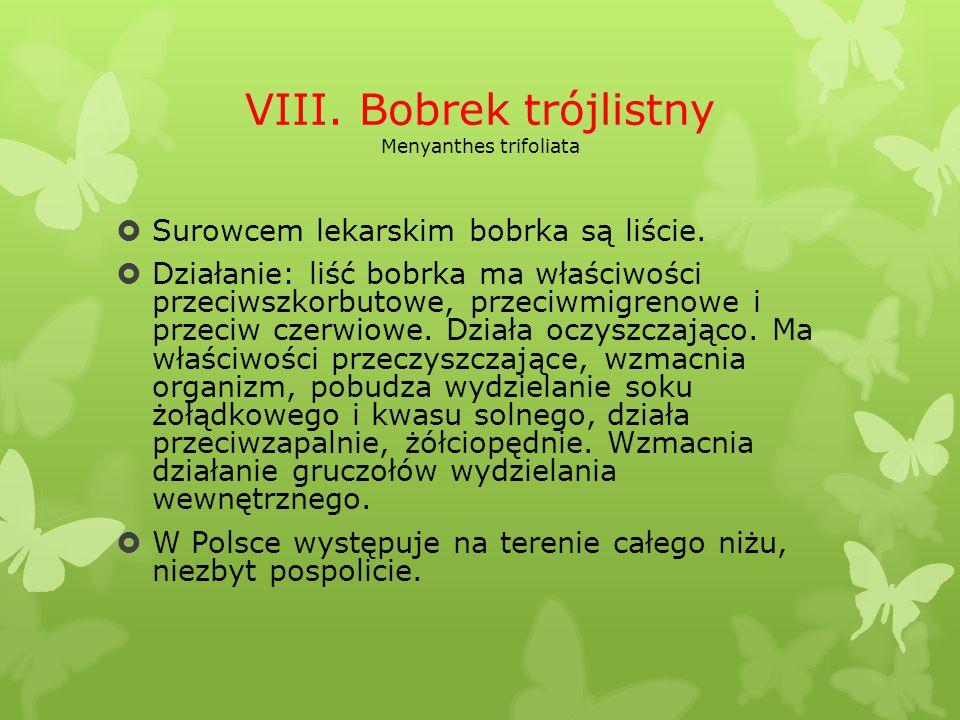 VIII. Bobrek trójlistny Menyanthes trifoliata