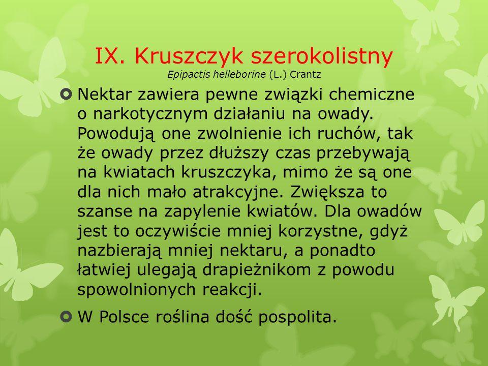 IX. Kruszczyk szerokolistny Epipactis helleborine (L.) Crantz