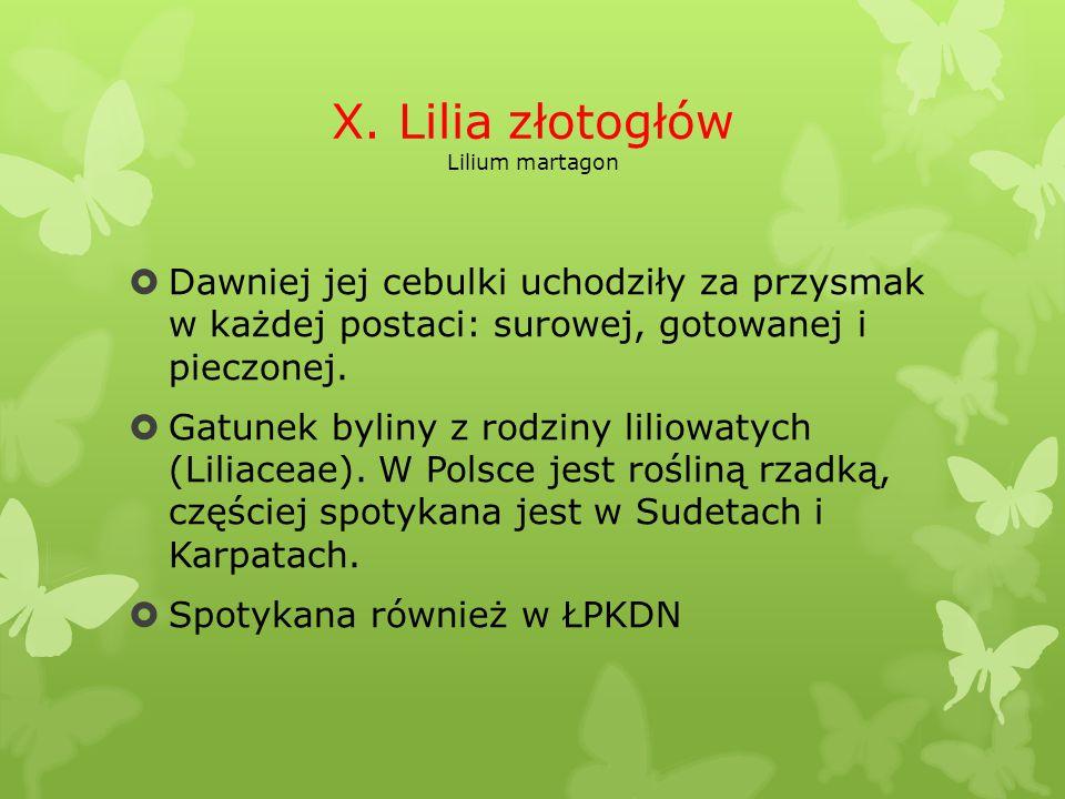 X. Lilia złotogłów Lilium martagon