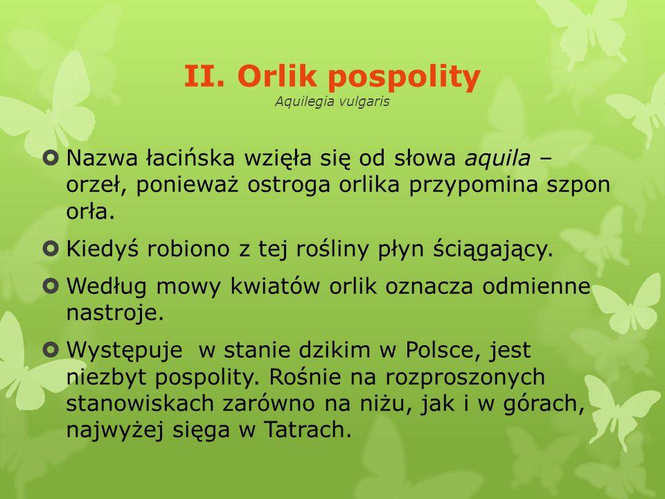 II. Orlik pospolity Aquilegia vulgaris