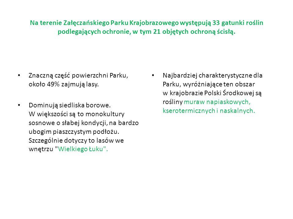 Na terenie Załęczańskiego Parku Krajobrazowego występują 33 gatunki roślin podlegających ochronie, w tym 21 objętych ochroną ścisłą.