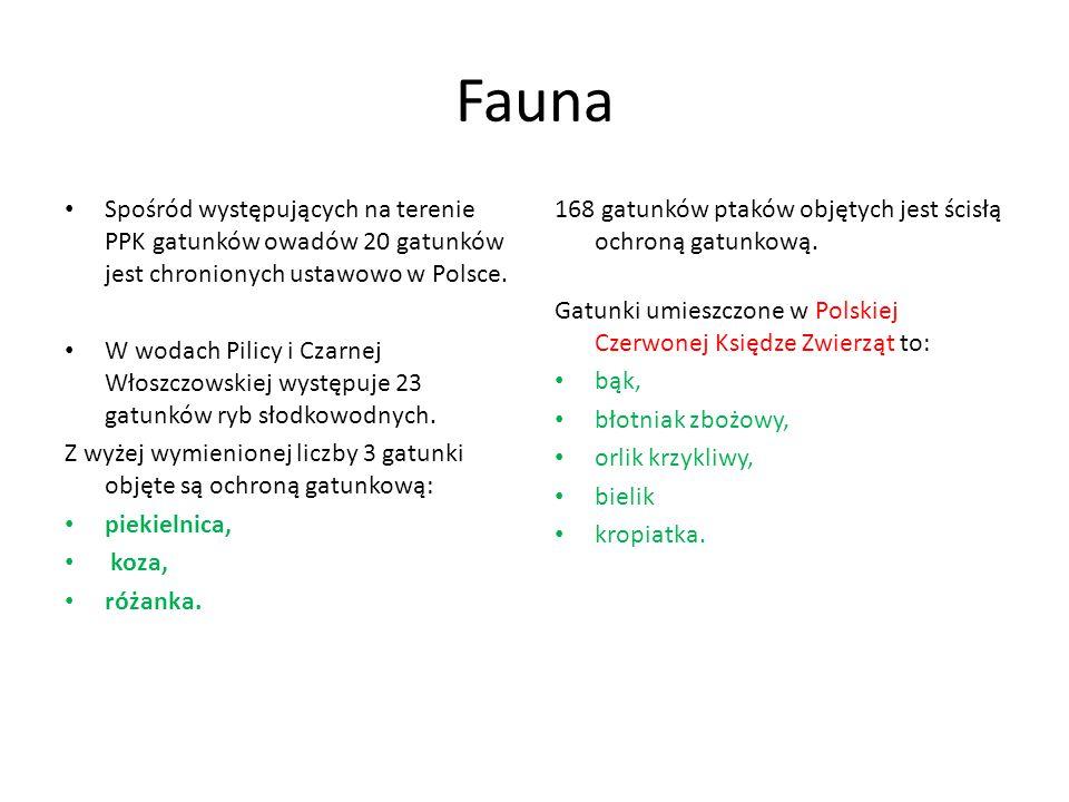 Fauna Spośród występujących na terenie PPK gatunków owadów 20 gatunków jest chronionych ustawowo w Polsce.