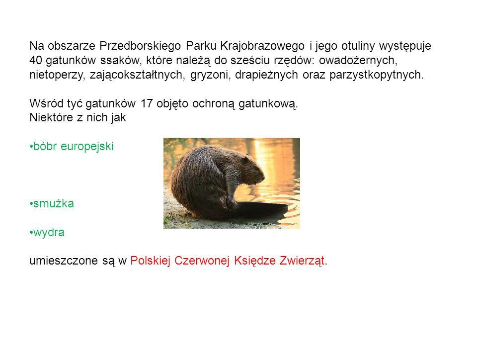 Na obszarze Przedborskiego Parku Krajobrazowego i jego otuliny występuje 40 gatunków ssaków, które należą do sześciu rzędów: owadożernych, nietoperzy, zającokształtnych, gryzoni, drapieżnych oraz parzystkopytnych.