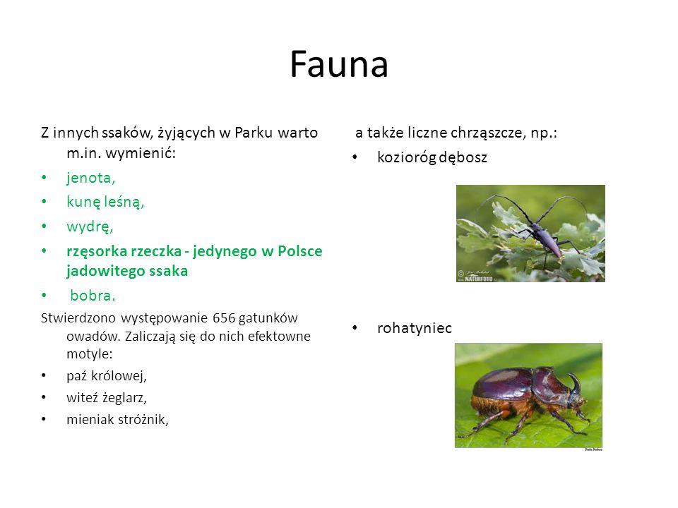 Fauna Z innych ssaków, żyjących w Parku warto m.in. wymienić: jenota,