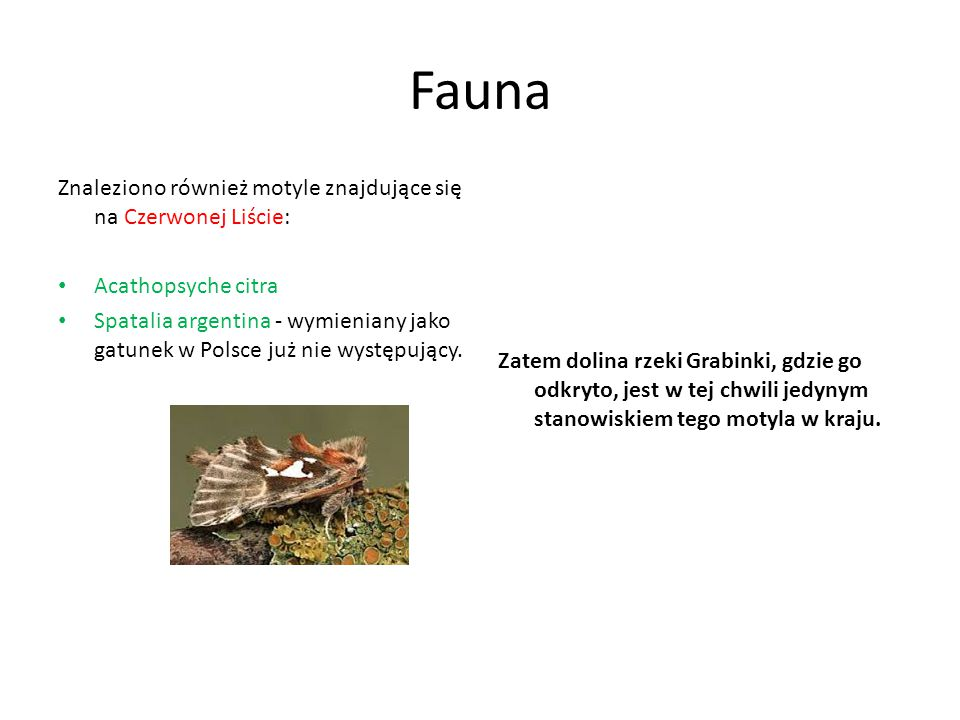 Fauna Znaleziono również motyle znajdujące się na Czerwonej Liście: