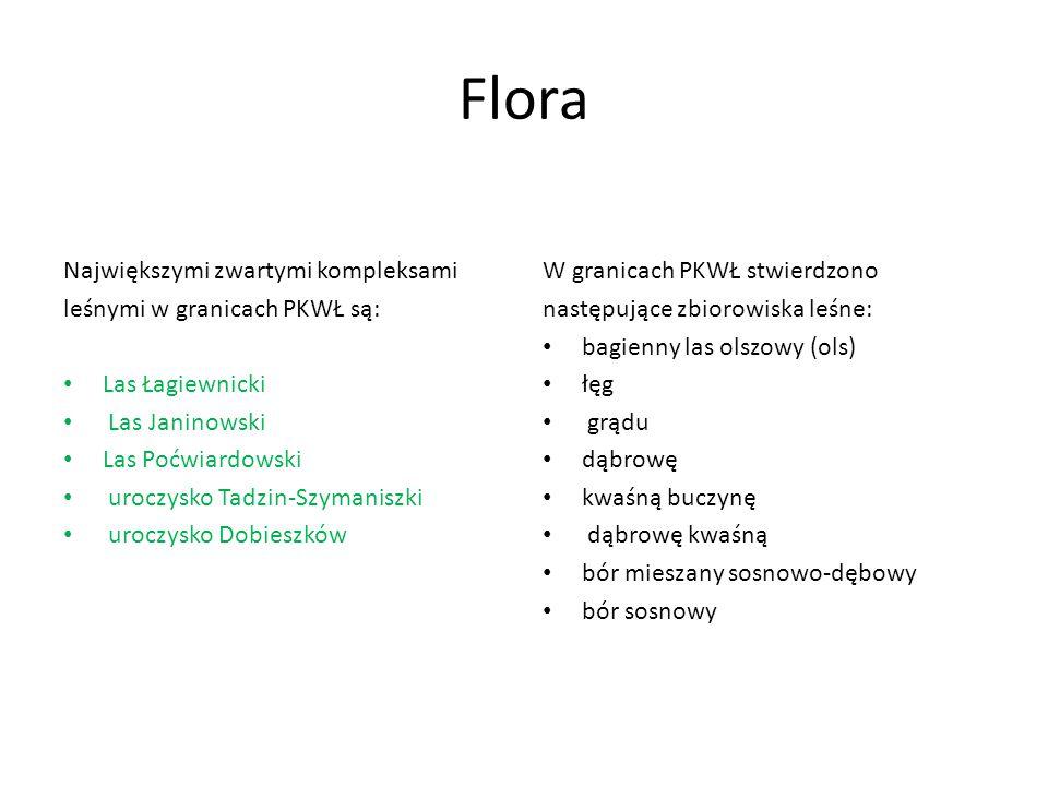 Flora Największymi zwartymi kompleksami leśnymi w granicach PKWŁ są: