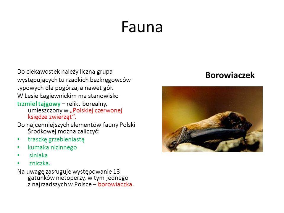Fauna Borowiaczek Do ciekawostek należy liczna grupa