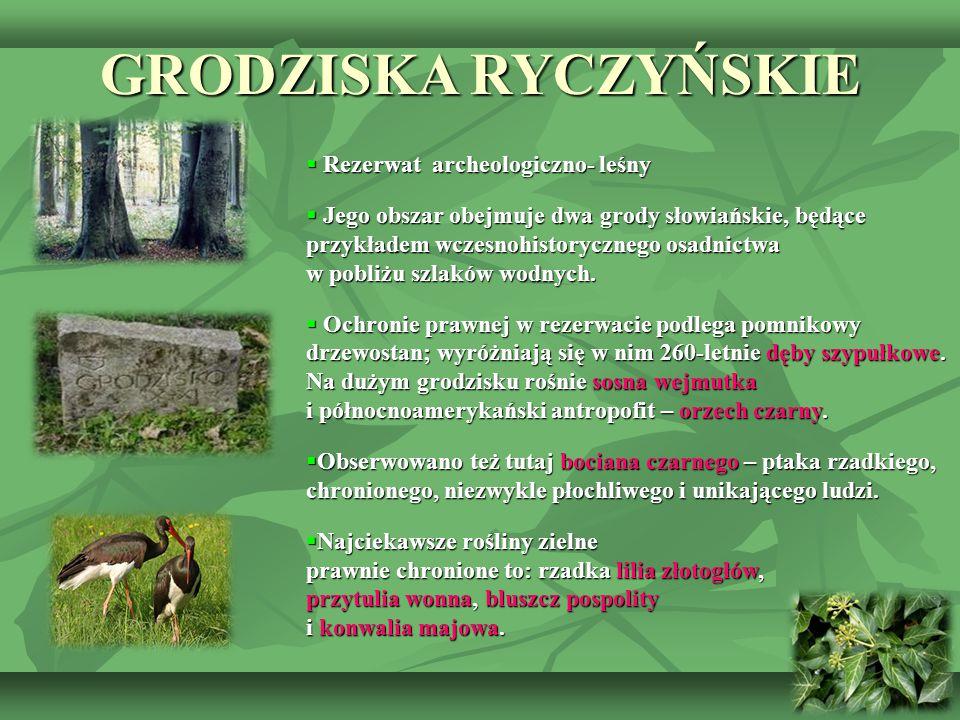GRODZISKA RYCZYŃSKIE Rezerwat archeologiczno- leśny