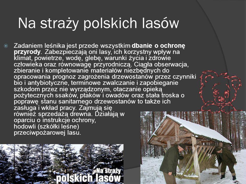 Na straży polskich lasów