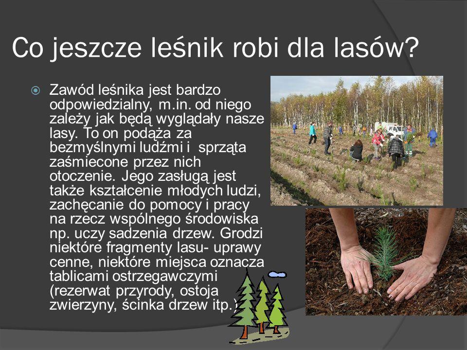 Co jeszcze leśnik robi dla lasów