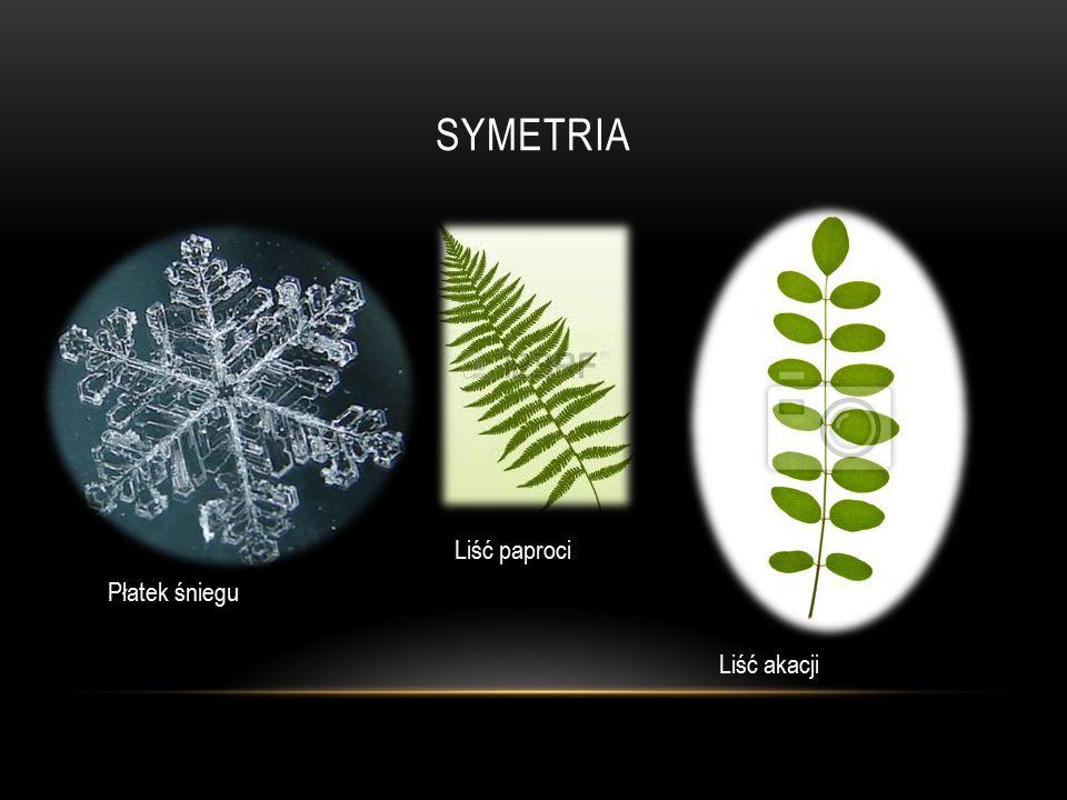 Symetria Liść paproci Płatek śniegu Liść akacji