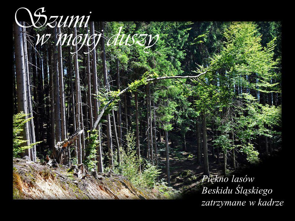 Piękno lasów Beskidu Śląskiego zatrzymane w kadrze