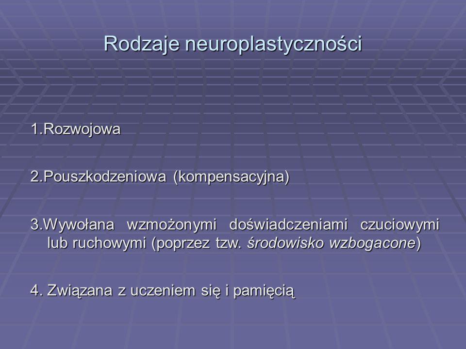 Rodzaje neuroplastyczności