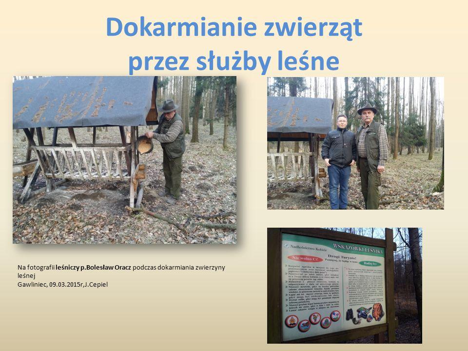 Dokarmianie zwierząt przez służby leśne