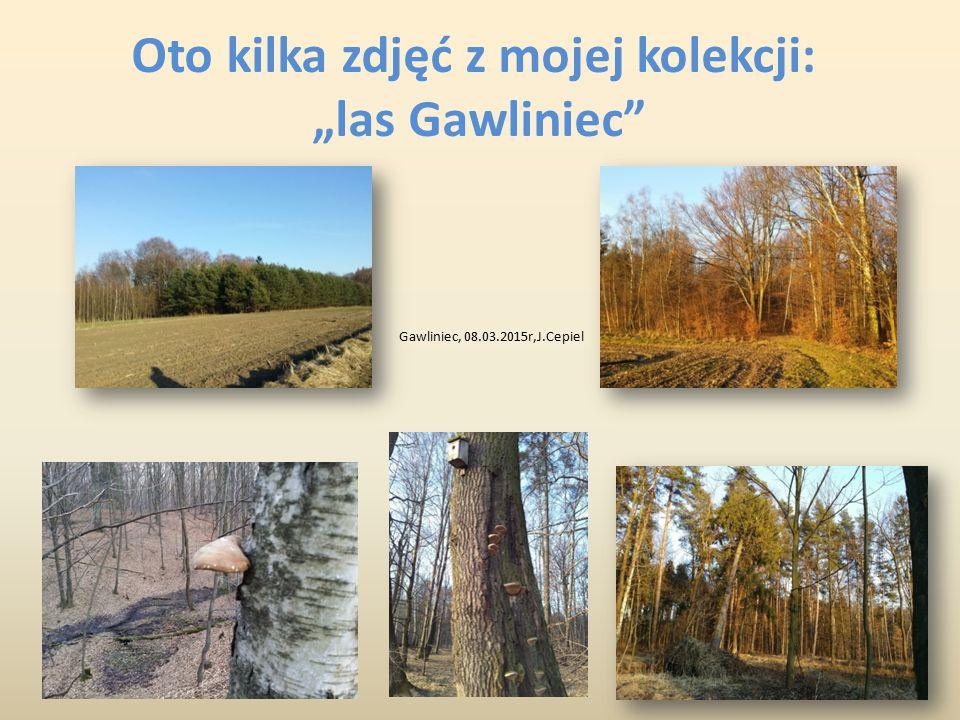 """Oto kilka zdjęć z mojej kolekcji: """"las Gawliniec"""