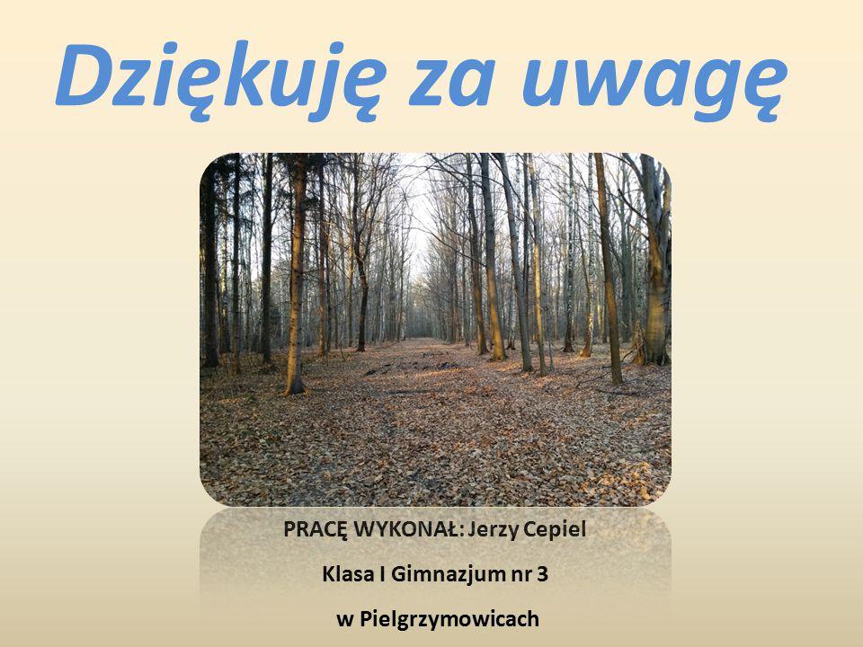 PRACĘ WYKONAŁ: Jerzy Cepiel