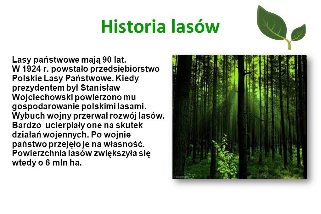 Historia lasów