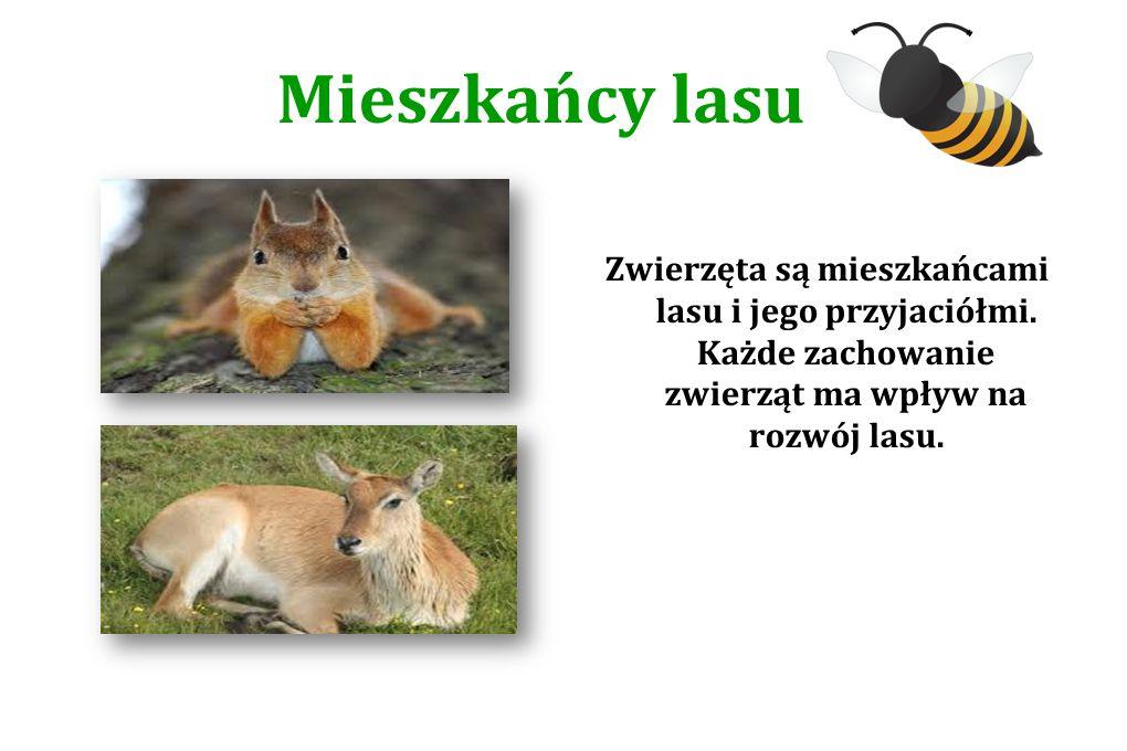 Mieszkańcy lasu Zwierzęta są mieszkańcami lasu i jego przyjaciółmi.