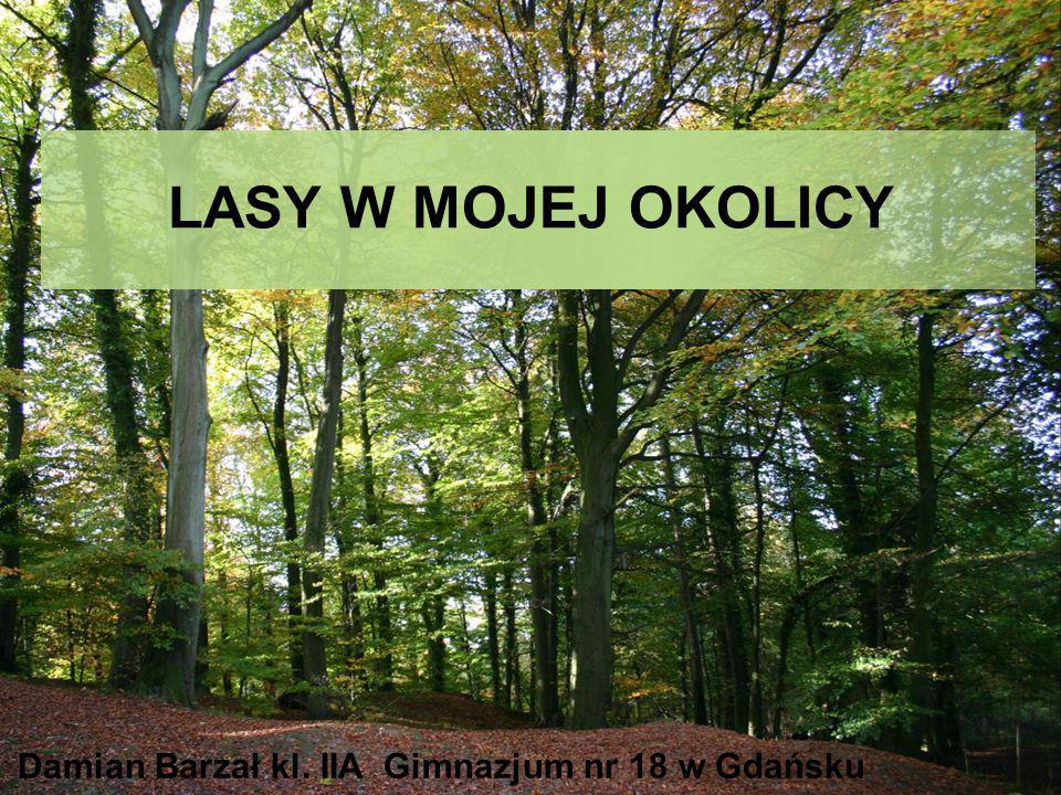 Damian Barzał kl. IIA Gimnazjum nr 18 w Gdańsku