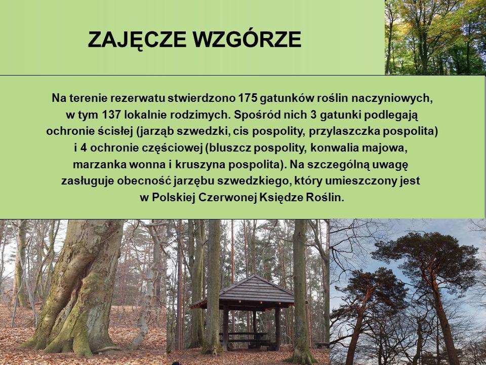 ZAJĘCZE WZGÓRZE Na terenie rezerwatu stwierdzono 175 gatunków roślin naczyniowych, w tym 137 lokalnie rodzimych. Spośród nich 3 gatunki podlegają.