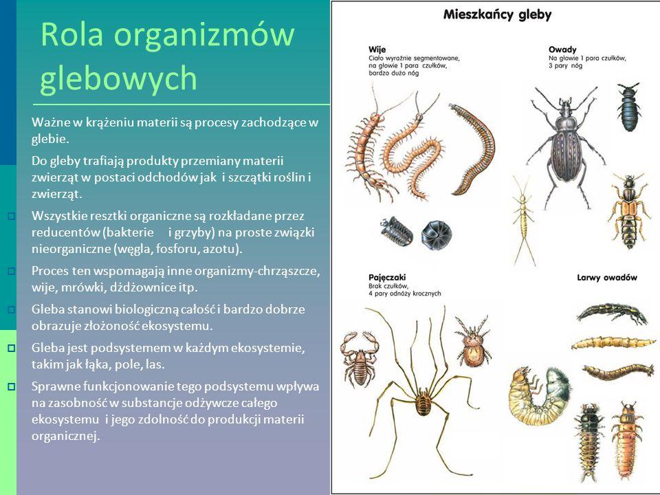 Rola organizmów glebowych