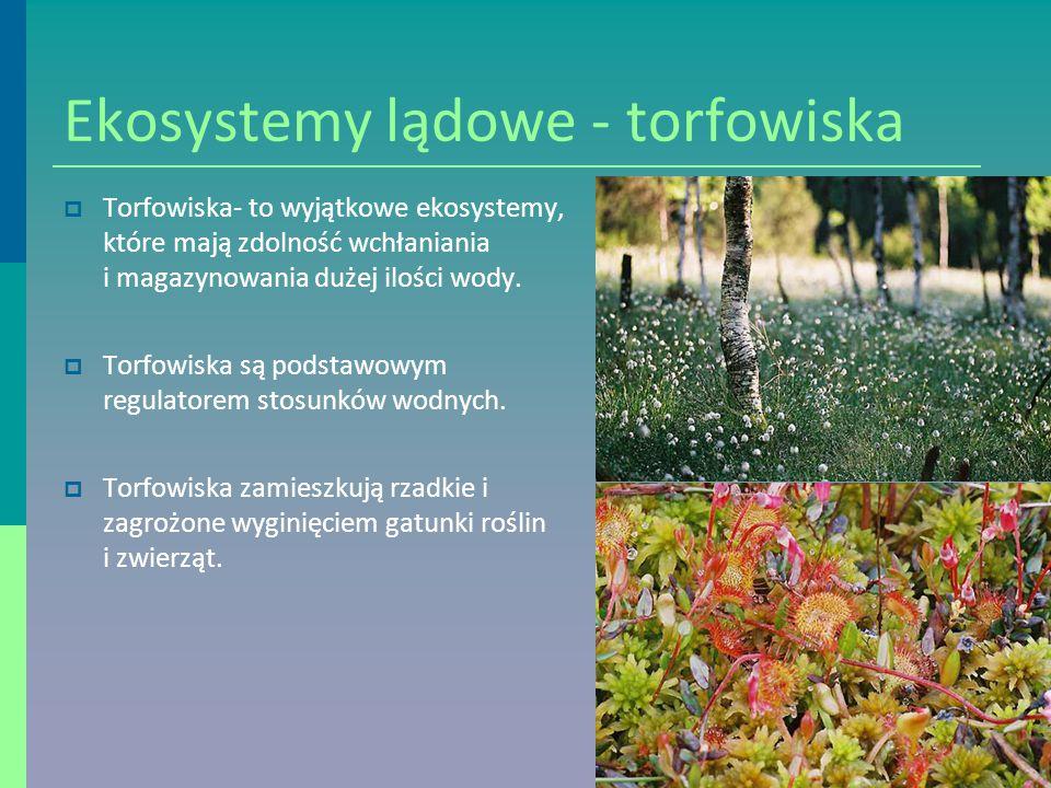 Ekosystemy lądowe - torfowiska