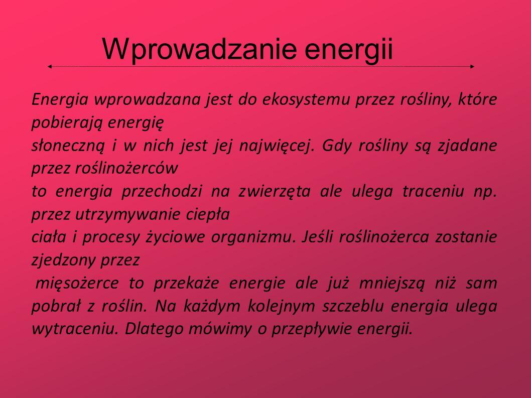 Wprowadzanie energii Energia wprowadzana jest do ekosystemu przez rośliny, które pobierają energię.
