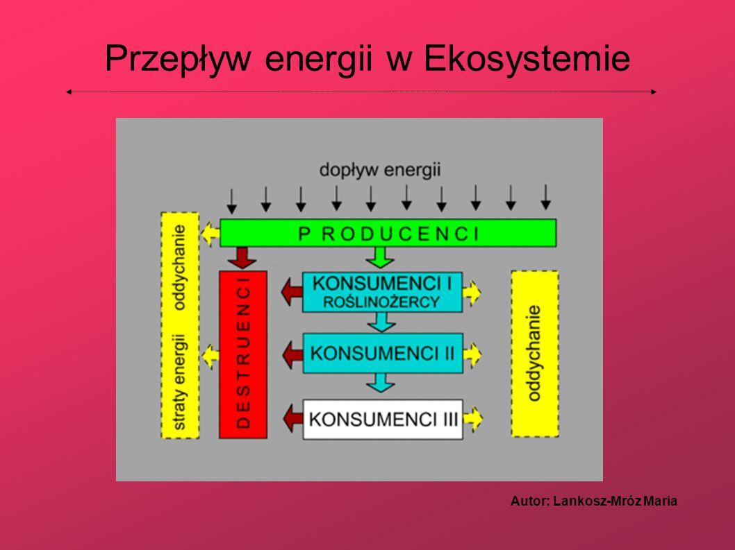 Przepływ energii w Ekosystemie