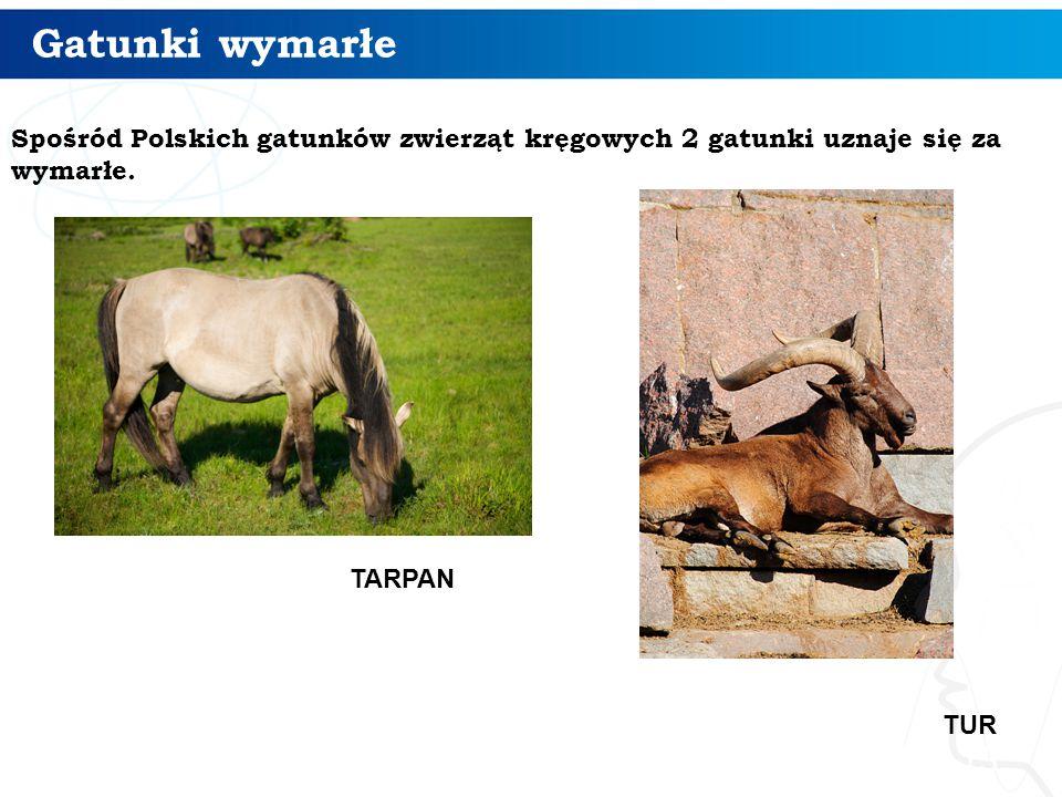 Gatunki wymarłe Spośród Polskich gatunków zwierząt kręgowych 2 gatunki uznaje się za wymarłe. TARPAN.