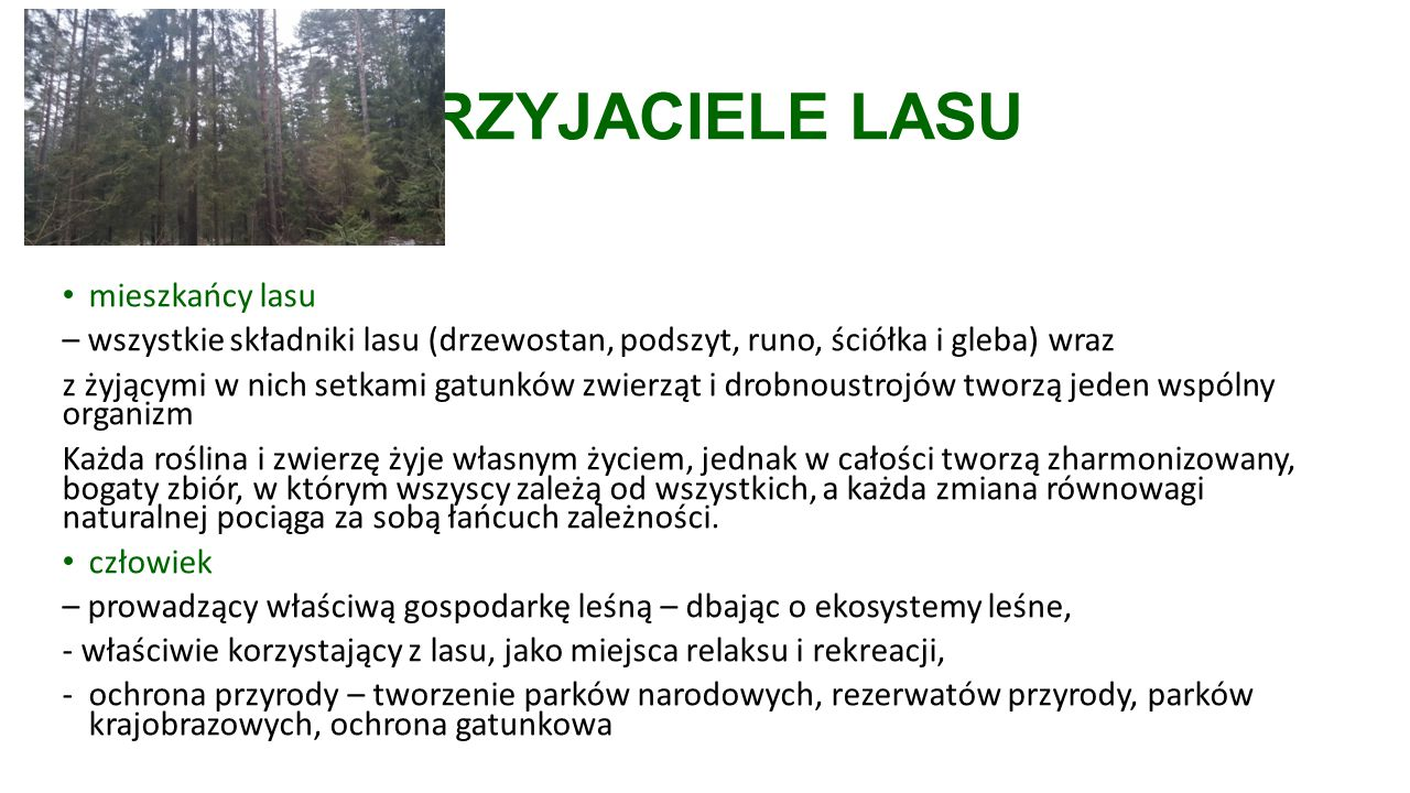 PRZYJACIELE LASU mieszkańcy lasu