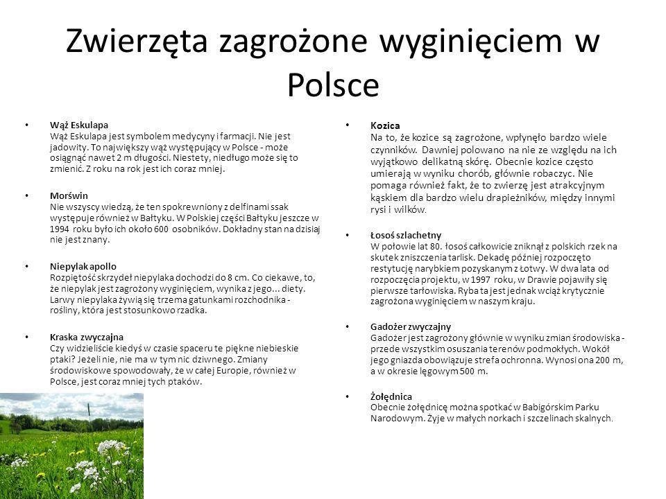 Zwierzęta zagrożone wyginięciem w Polsce