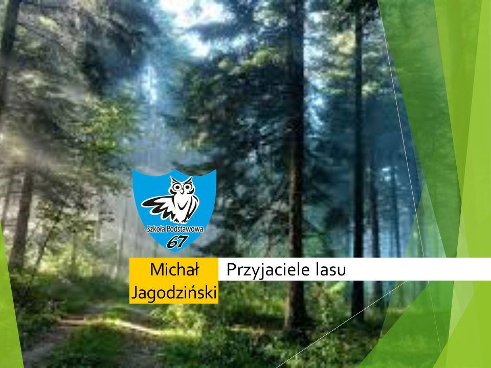 Michał Jagodziński Przyjaciele lasu