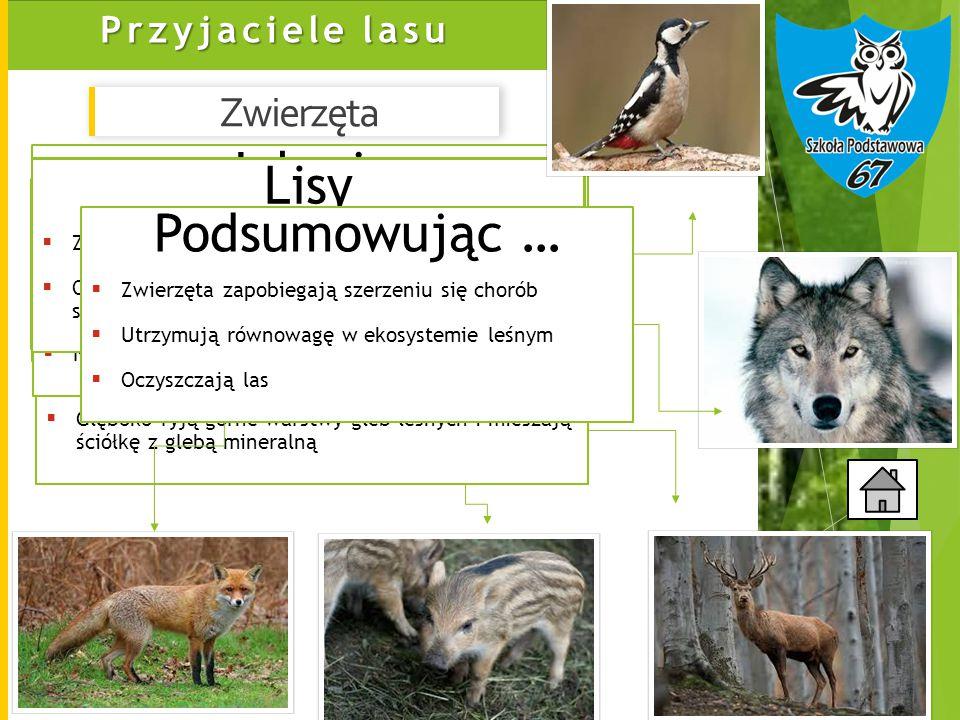 Jelenie Dziki Dzięcioły Lisy Wilki Podsumowując … Zwierzęta
