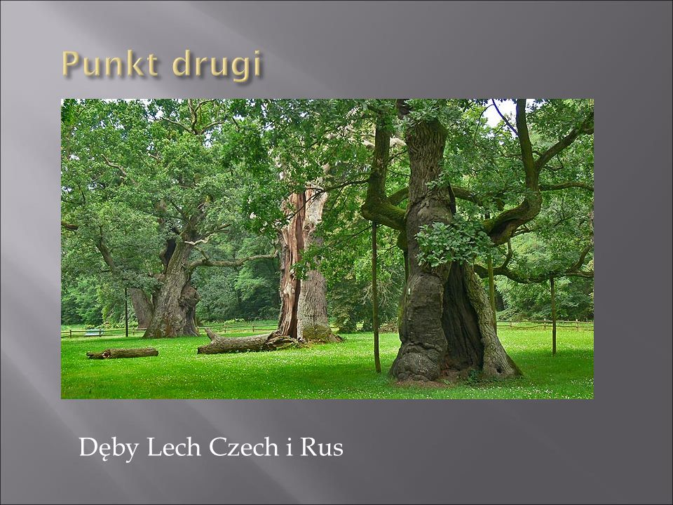 Punkt drugi Dęby Lech Czech i Rus
