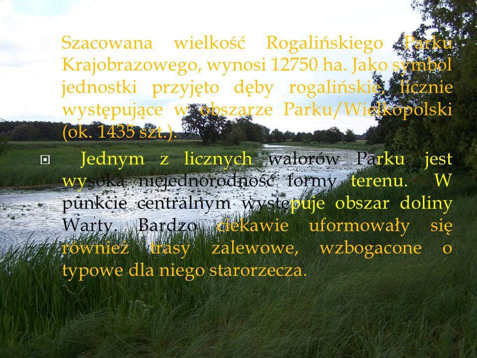 Szacowana wielkość Rogalińskiego Parku Krajobrazowego, wynosi 12750 ha