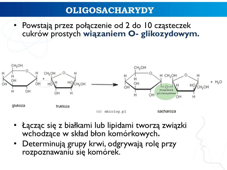 OLIGOSACHARYDY Powstają przez połączenie od 2 do 10 cząsteczek cukrów prostych wiązaniem O- glikozydowym.
