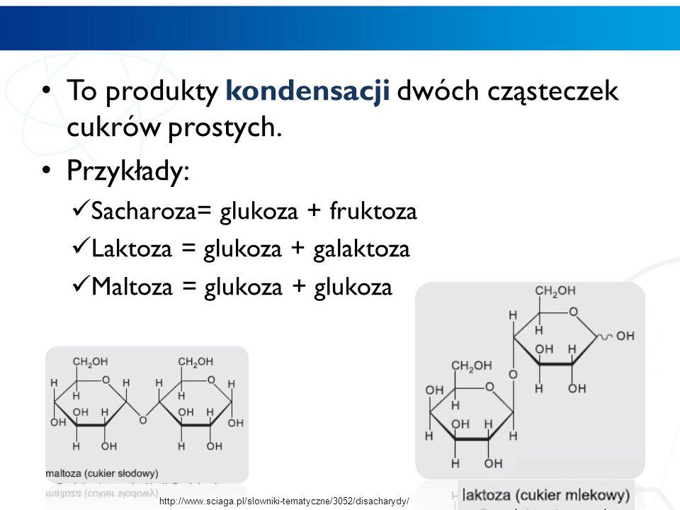 To produkty kondensacji dwóch cząsteczek cukrów prostych. Przykłady: