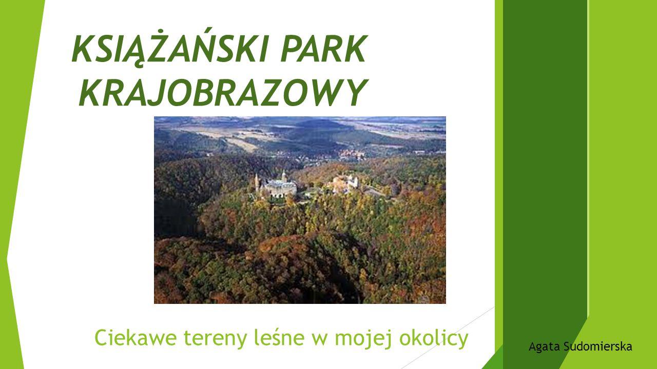 KSIĄŻAŃSKI PARK KRAJOBRAZOWY Ciekawe tereny leśne w mojej okolicy