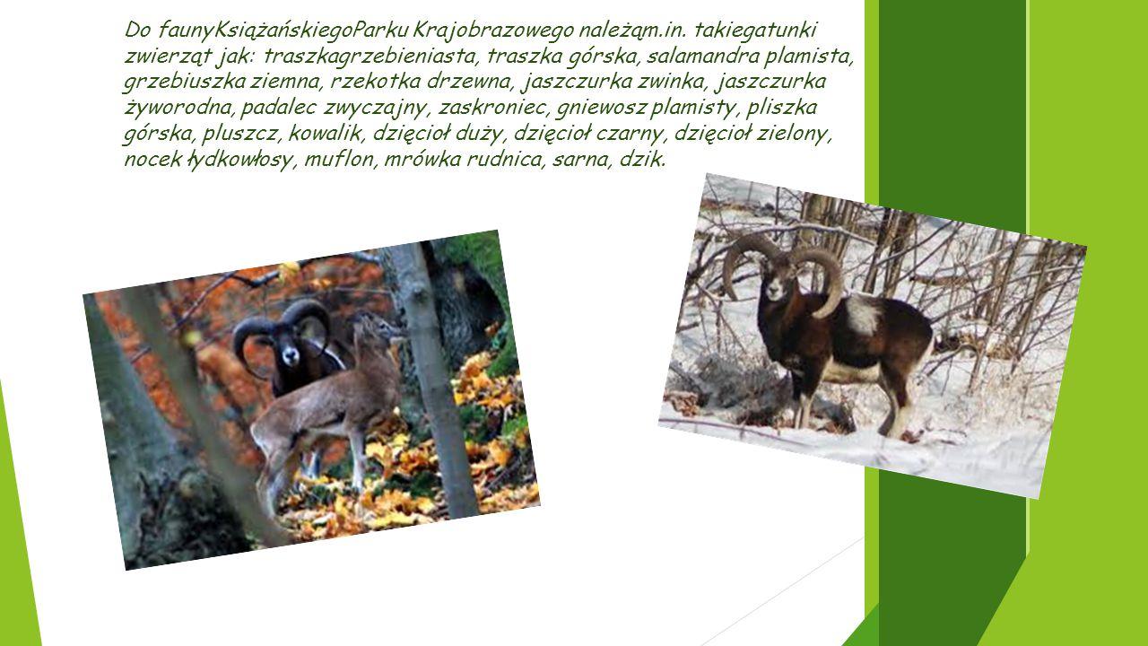 Do faunyKsiążańskiegoParku Krajobrazowego należąm. in