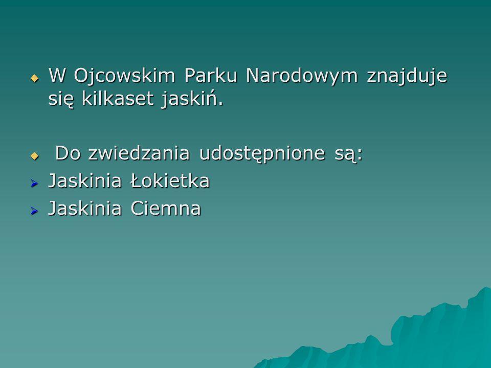 W Ojcowskim Parku Narodowym znajduje się kilkaset jaskiń.