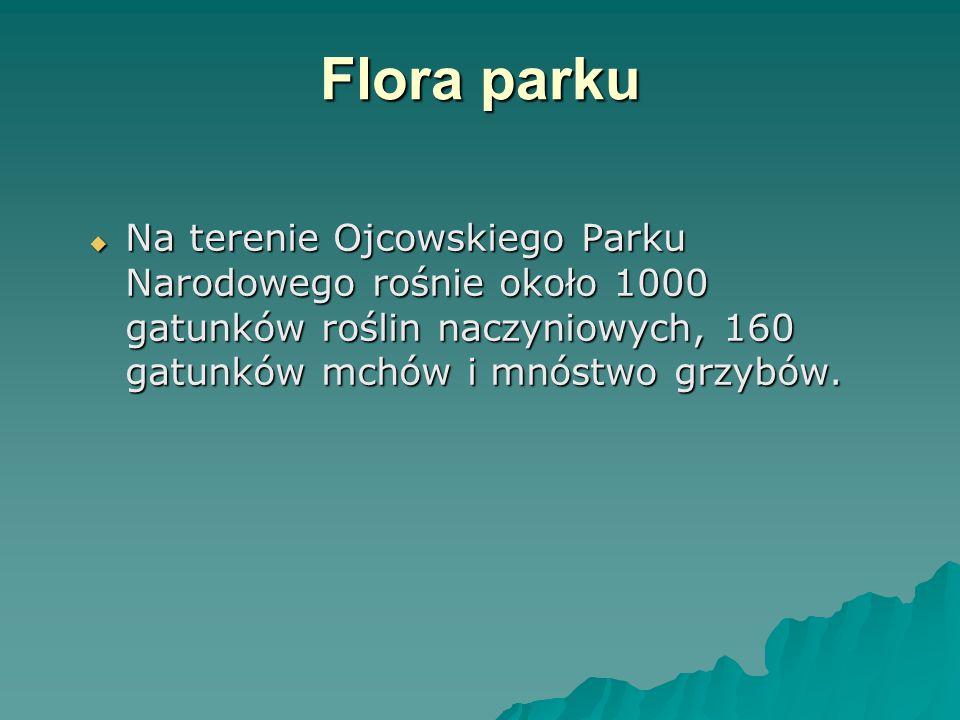 Flora parku Na terenie Ojcowskiego Parku Narodowego rośnie około 1000 gatunków roślin naczyniowych, 160 gatunków mchów i mnóstwo grzybów.