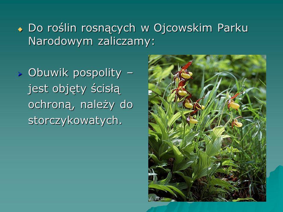 Do roślin rosnących w Ojcowskim Parku Narodowym zaliczamy:
