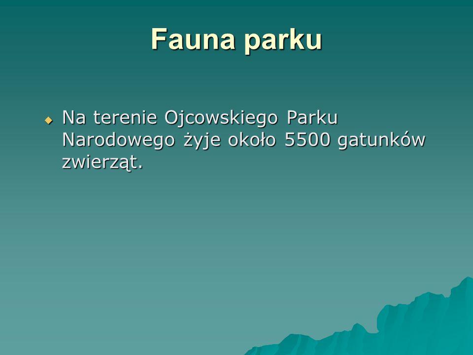 Fauna parku Na terenie Ojcowskiego Parku Narodowego żyje około 5500 gatunków zwierząt.