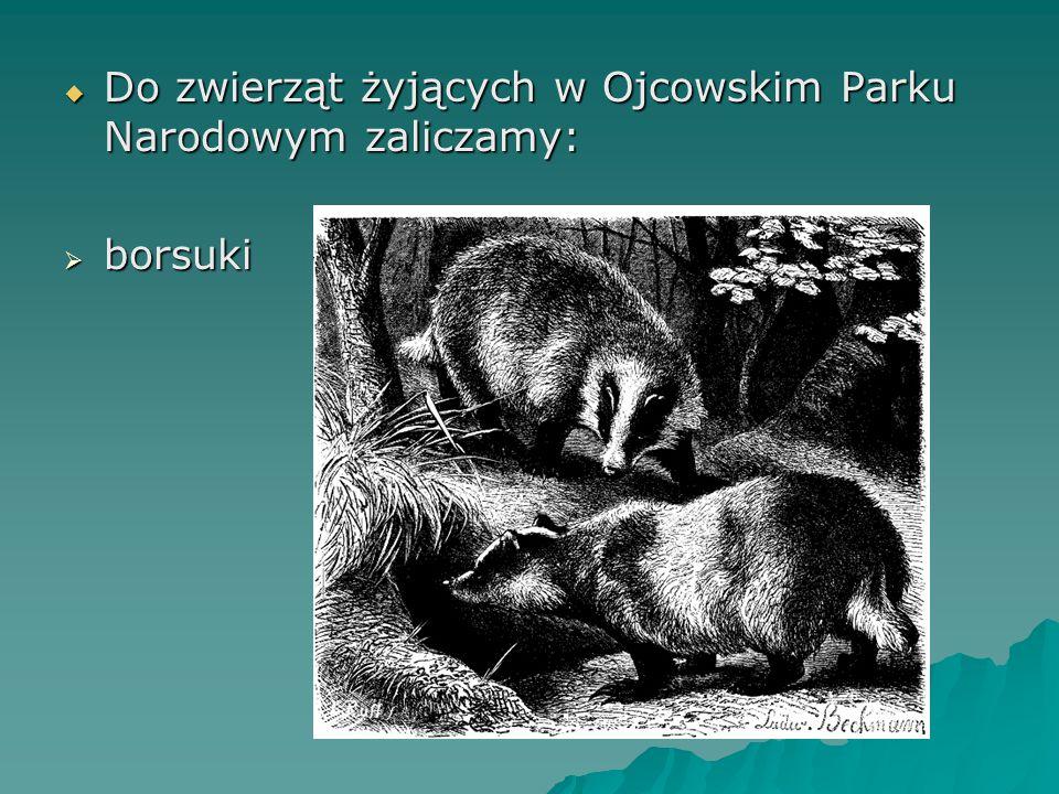 Do zwierząt żyjących w Ojcowskim Parku Narodowym zaliczamy:
