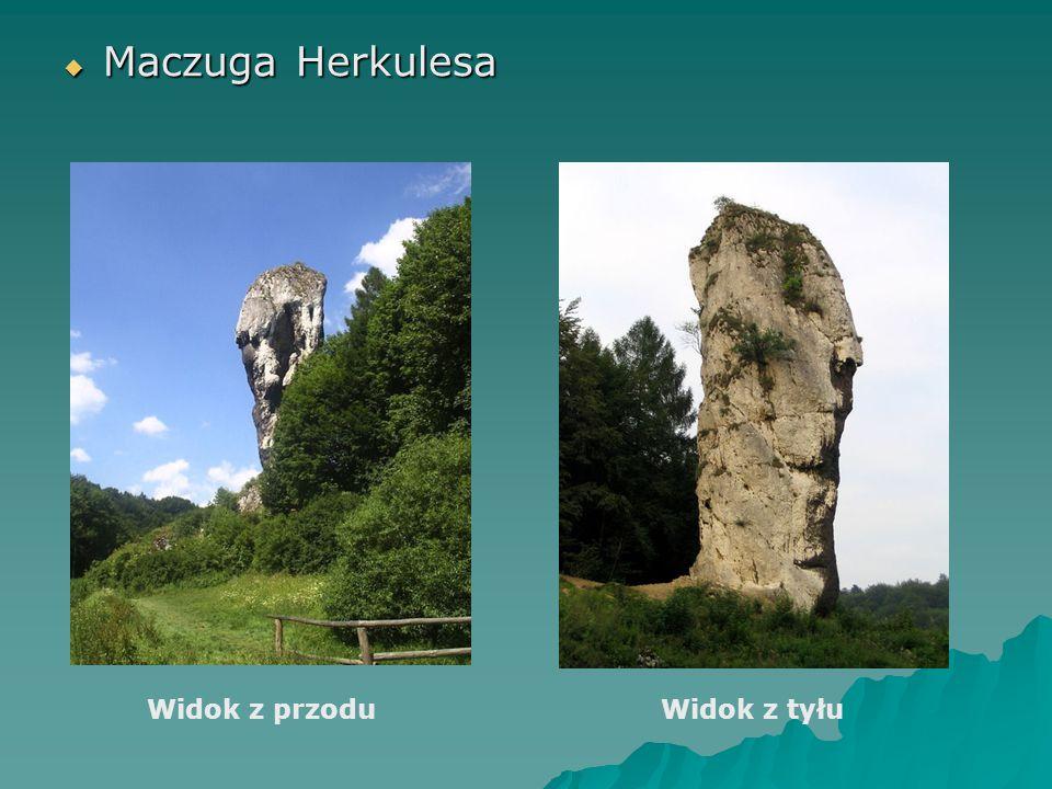Maczuga Herkulesa Widok z przodu Widok z tyłu