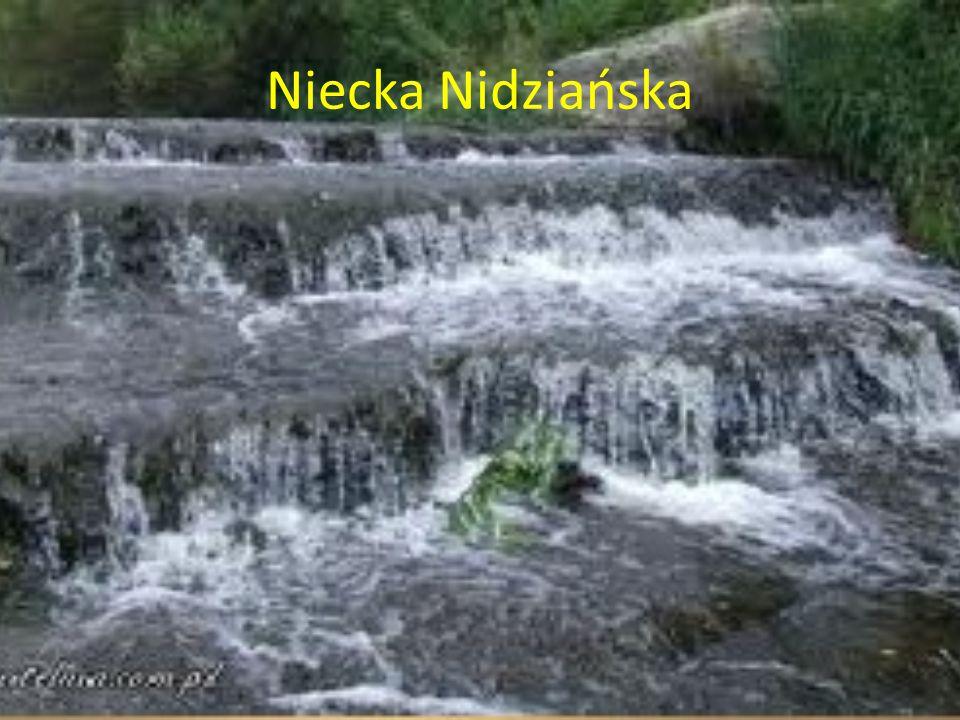 Niecka Nidziańska