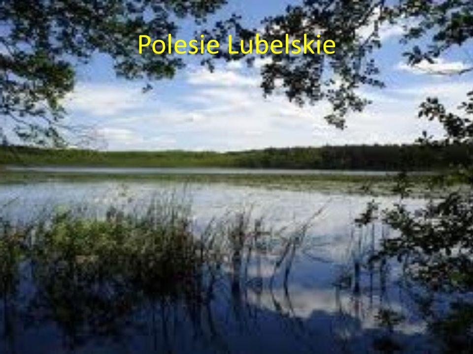 Polesie Lubelskie
